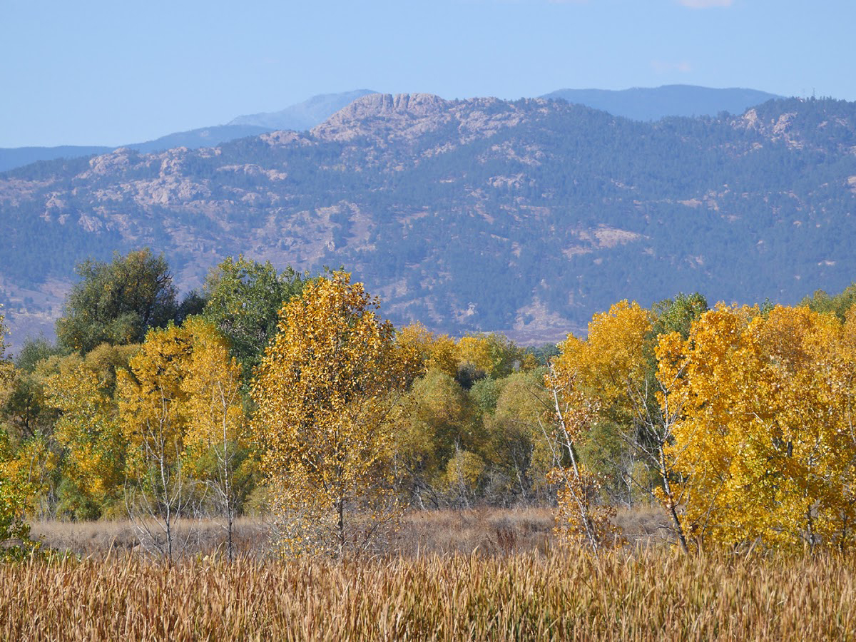 29-evergreen-fort_collins-horsetooth-fox_grove